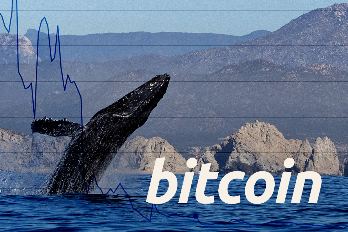 Over 1.3 Million Bitcoins Transferred by Anonymous Whales in Large Lumps