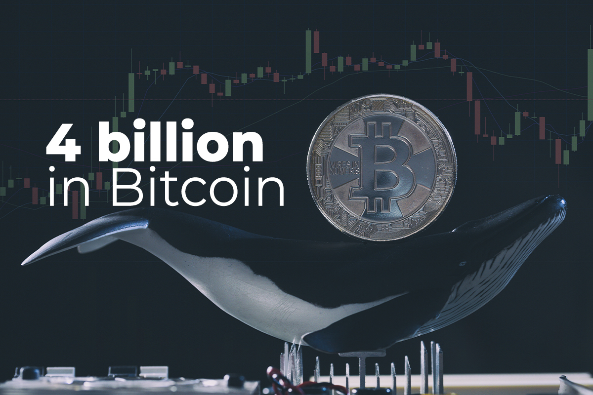 Whales Shift More $4 Billion in Bitcoin, While BTC Declines to $48,500