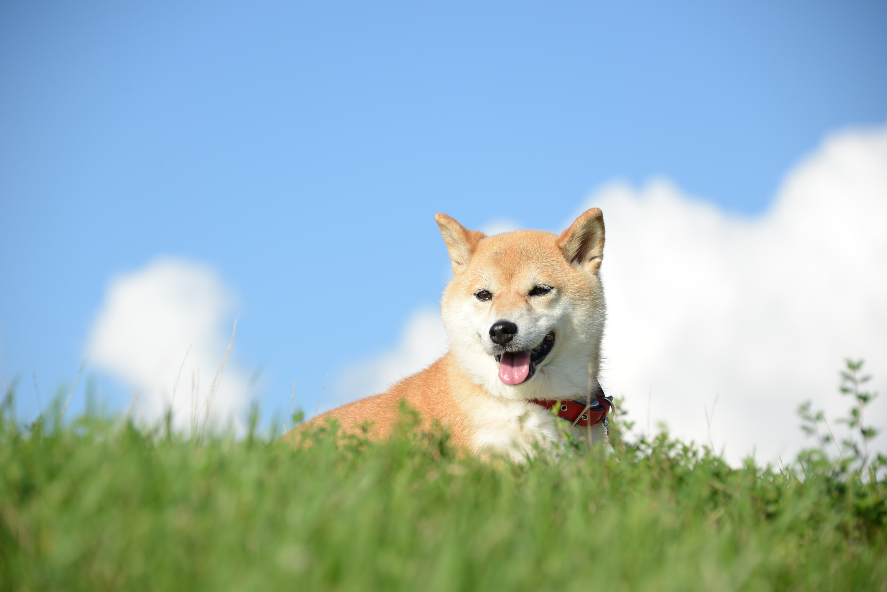 Elon Musk Sends Dogecoin Offshoot Soaring with Photo of His Dog