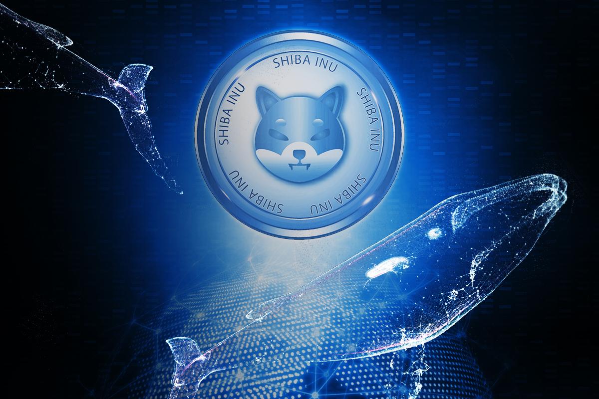 Multiple Crypto Whales Grab Over $46 Million of SHIB Recently: SHIB Community