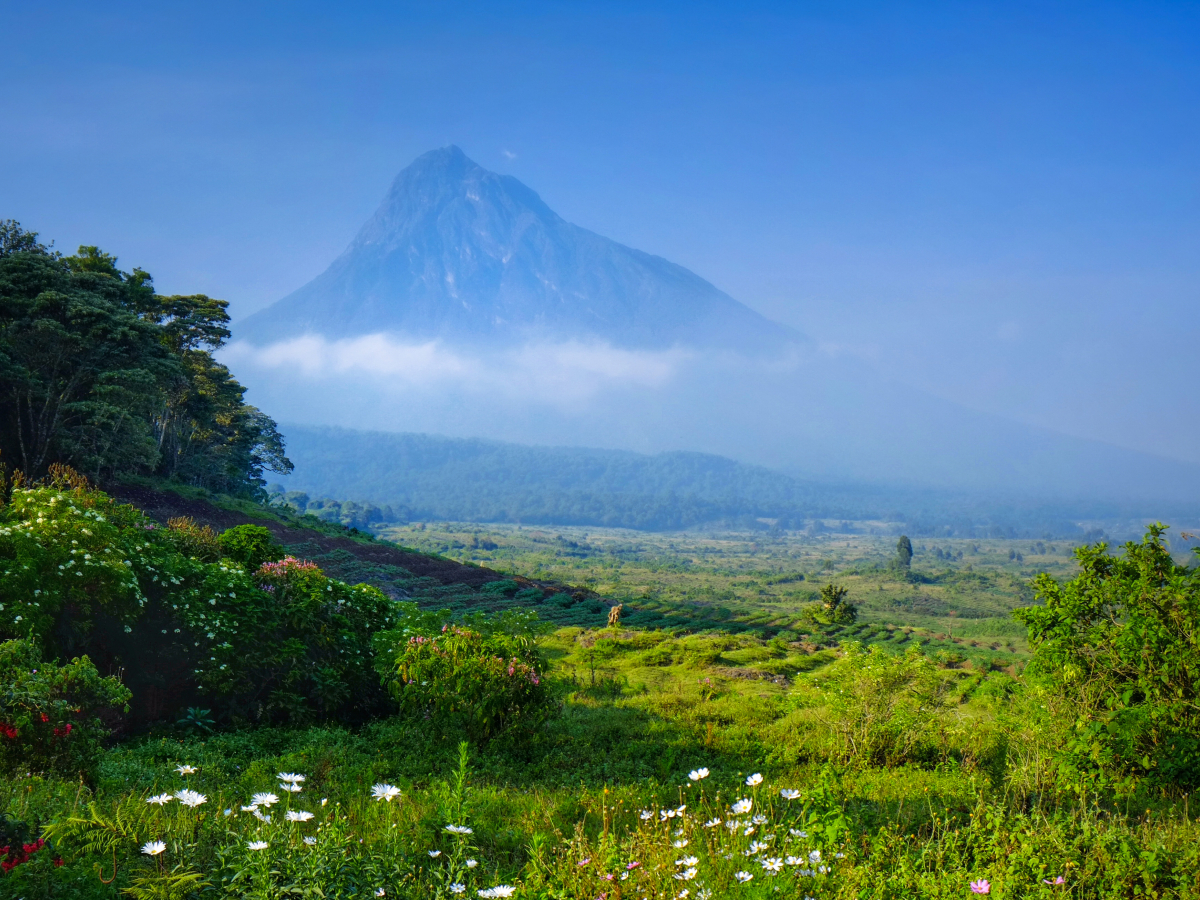 Virunga National Park Now Accepts Bitcoin, Ethereum, Litecoin, Chainlink, and Other Coins as Donations