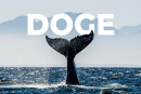 Trader unveils sensational theory about most powerful DOGE whale