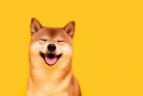 Dogecoin Spin-Off Turns Struggling Brothers Into Overnight Millionaires