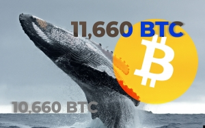 Bitcoin Whale Receives 11,660 BTC and Sends 10,660 BTC to Anonymous Wallet