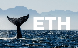 Mid-Sized Whales Are Dumping ETH, While Smaller Holders Are Acquiring It, Here's What It Means