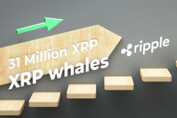 Ripple Helps Move 31 Million XRP, While Number of XRP Whales Soars in Q1
