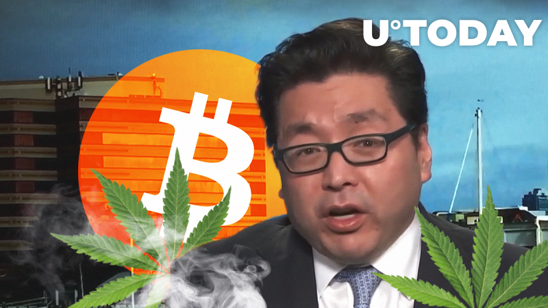 Buy High: Bitcoin (BTC) Compared to Cannabis Stocks by Fundstrat's Tom Lee