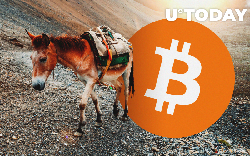 Bitcoin Fraudsters Trick Victims Into Becoming Money Mules. Here's How They Do It
