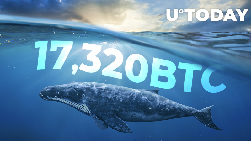 17,320 BTC Moved from Top Exchanges to Anon Wallets – Are Whales Waiting for Leap Over $10,000?