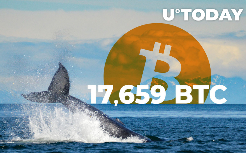 Whales Move 17,659 BTC Between Coinbase, Binance and Anon BTC Wallets
