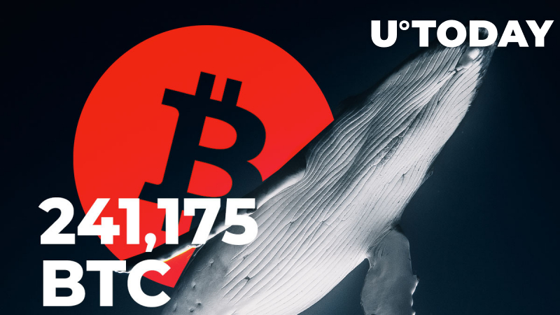 Bitcoin Whales Transfer 241,175 BTC in One Hour