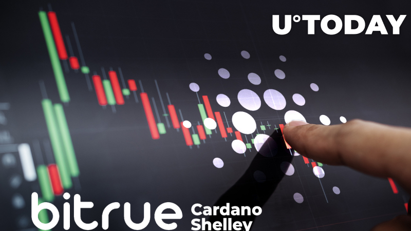 Bitrue Is First Exchange to Support Cardano's Shelley Hard Fork