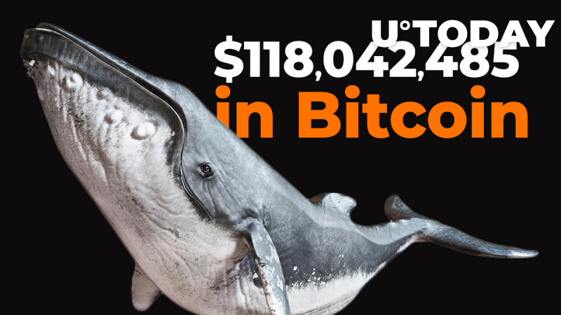 Crypto Whales Shift $118,042,485 in Bitcoin as BTC Hangs Below $10,500