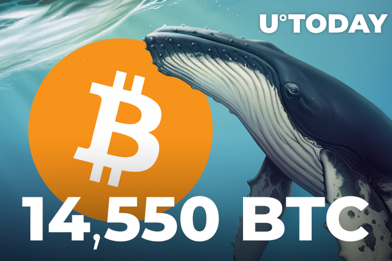 Whales Move 14,550 BTC to Binance, Bitcoin Selling Pressure Is High: CryptoQuant CEO