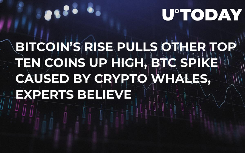 Bitcoin's Rise Pulls Other Top Ten Coins Up High, BTC Spike Caused by Crypto Whales, Experts Believe